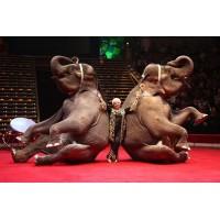 Посещение цирка на Цветном бульваре