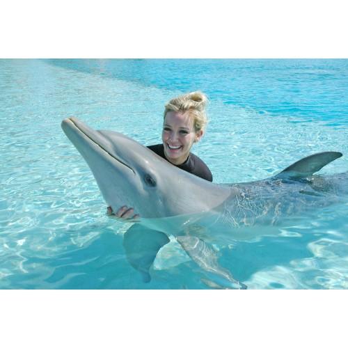 Плавание с дельфинами в Москвариуме